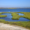 Bolsa Chica Ecological Reserve : Location Information: http://www.bolsachicalandtrust.org/index.html